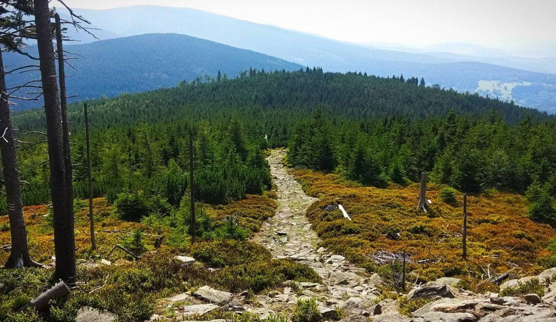 Puchaczówka Czarna Góra Międzygórze Masyw Śnieżnika