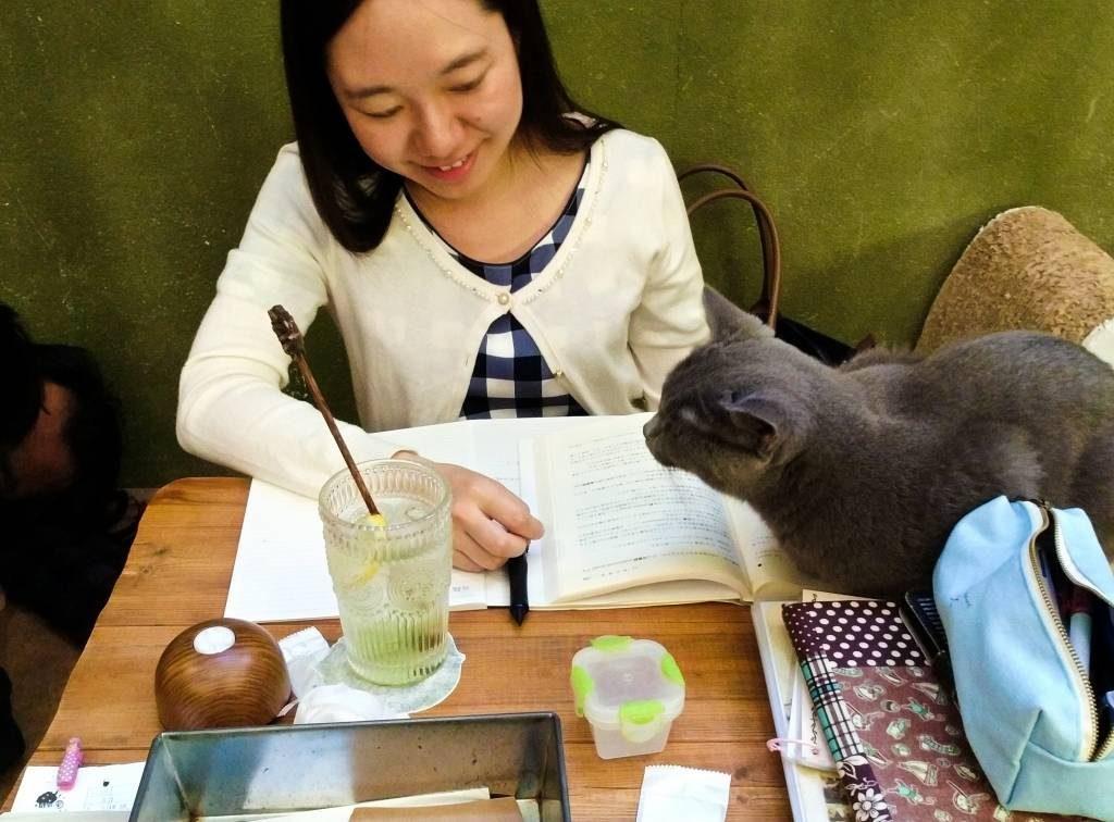 Tokio atrakcje cat cafe kocia kawiarnia