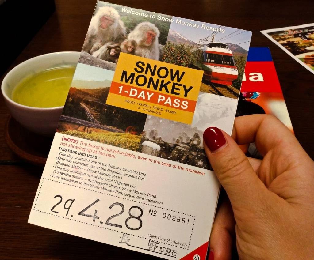 śnieżne małpy nagano gorące kąpiele makaki japońskie kąpią się w gorących źródłach