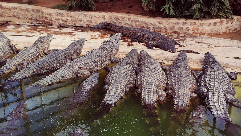 Atrakcje turystyczne Dżerby. Djerba co zwiedzać. Przewodnik po Dżerbie. Co ciekawego zobaczyć na Djarbie. Tunezja Djerba Explore farma krokodyli