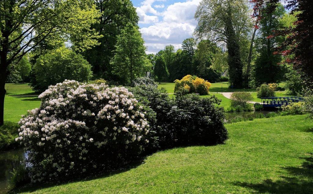 Park Mużakowski. Muskauerer Park rododendrony