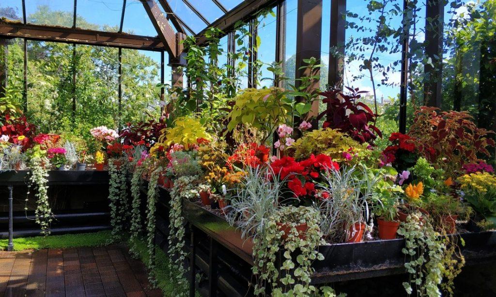 atrakcje w Glasgow. Ogród botaniczny Szkocja