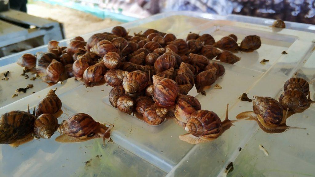 Bistro Ślimaka. Snails Garden Krasin