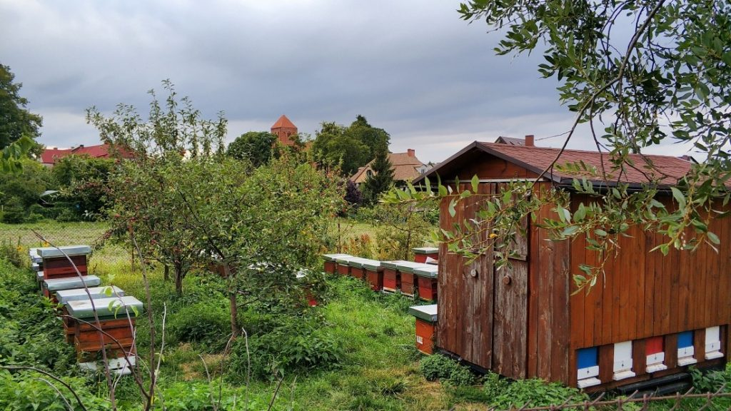 Pasieka Jabłońskich Łąkorz. Atrakcje okolic Nowego Miasta Lubawskiego