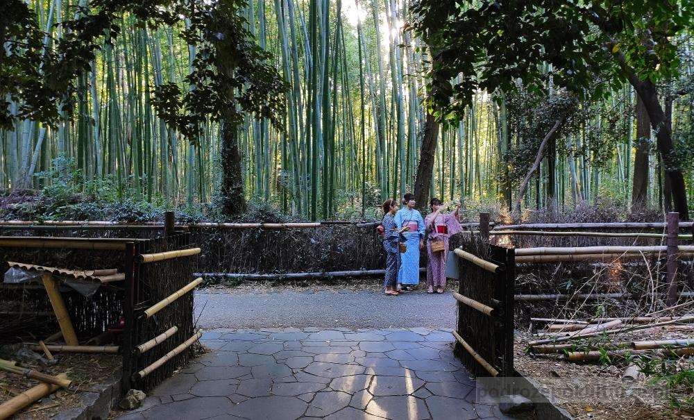 bambusowy las w Kioto