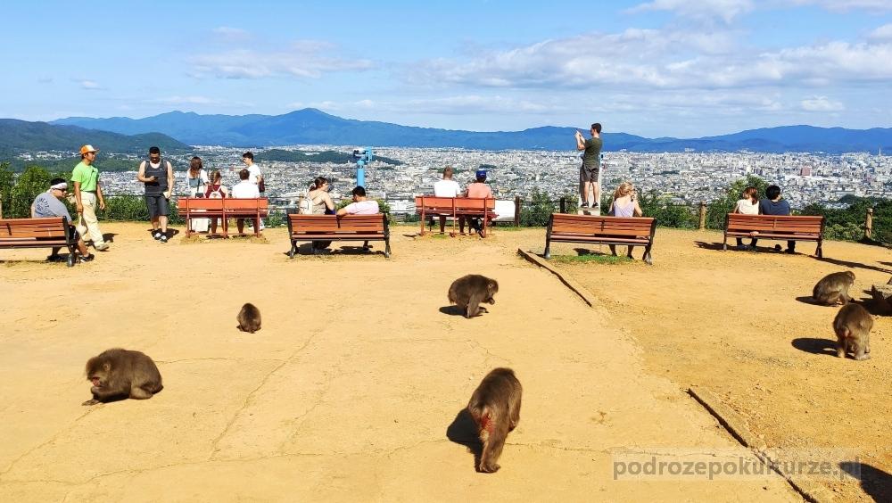 Park Małp Iwatayama