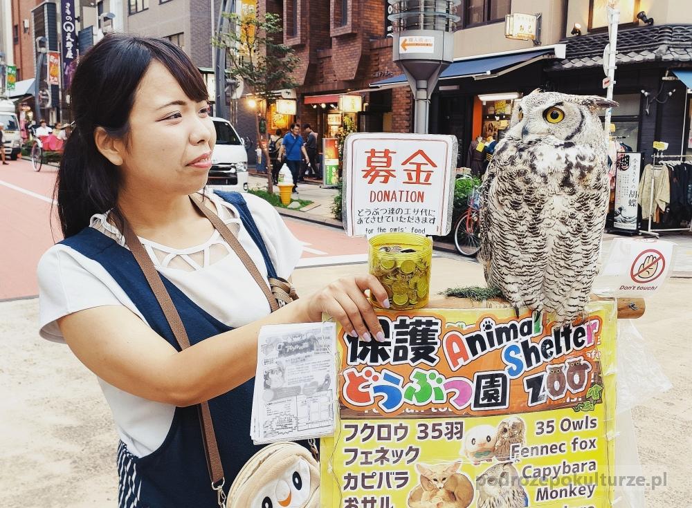 Jak zorganizować wyjazd do Japonii | pieniądze, internet i inne ważne sprawy