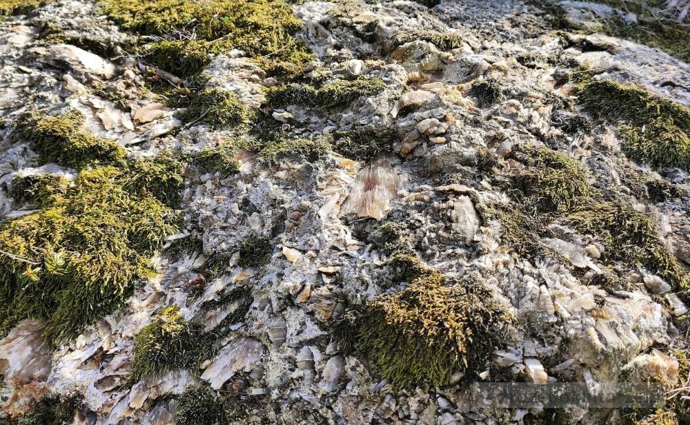 Wiślica: skała gipsowa. Ponidzie