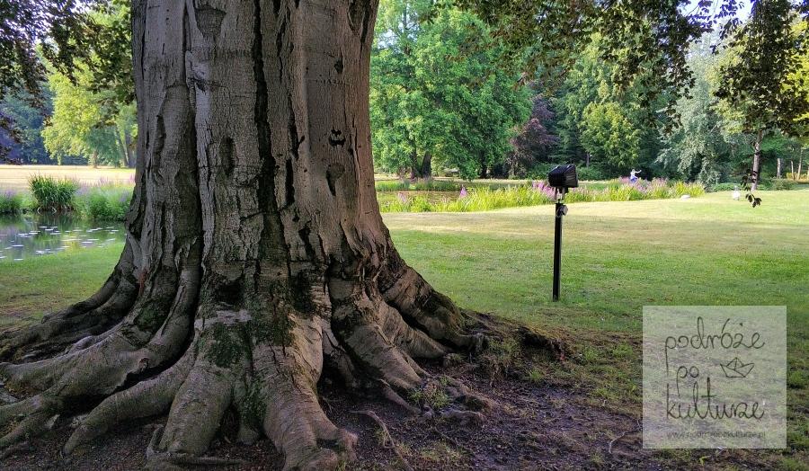 Park w Branitz