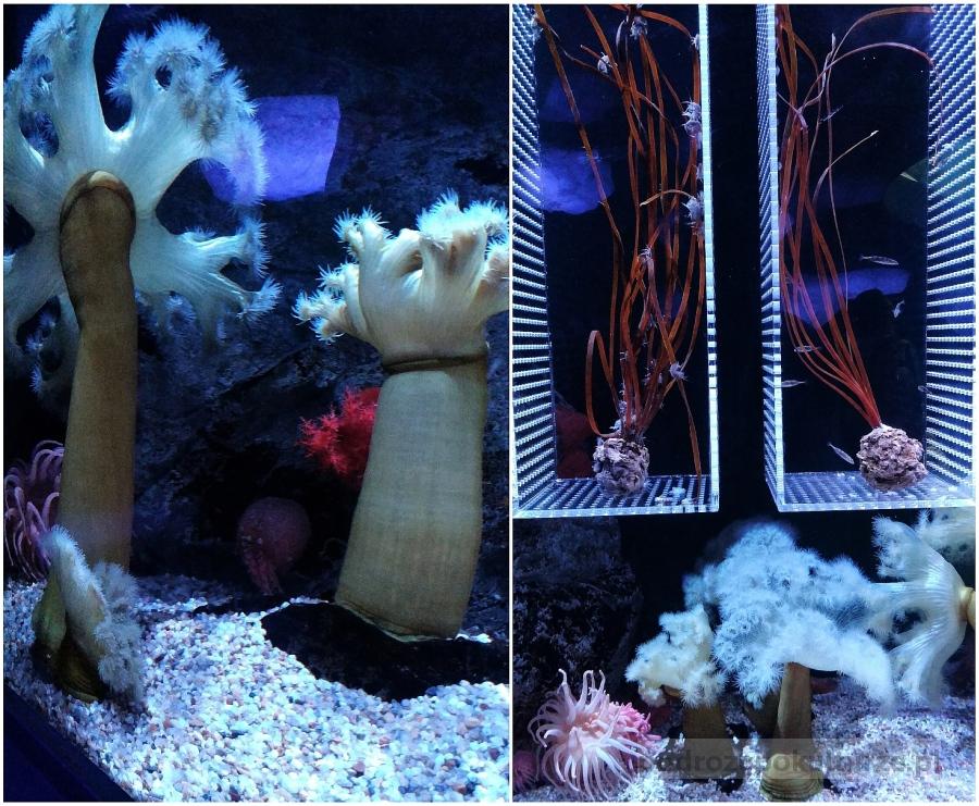 Atrakcje w Osace. Akwarium Kaiyukan