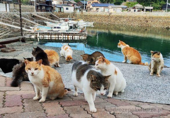 Aoshima wyspa kotów w Japonii