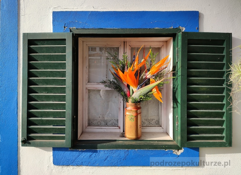kwiat strelicja Madera