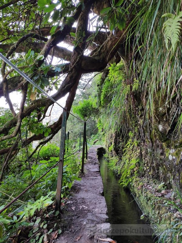 lewada PR9 Levada do Caldeirão Verde