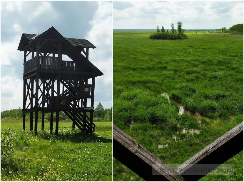 Biebrzański Park Narodowy, bagno ławki, wieża widokowa