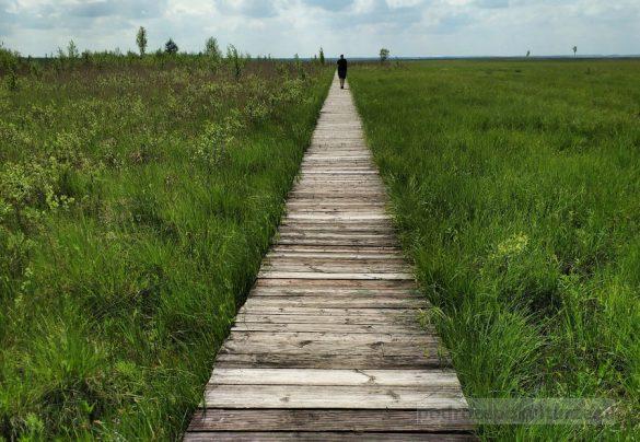 Biebrzański Park Narodowy kładka długa luka na bagnie ławki
