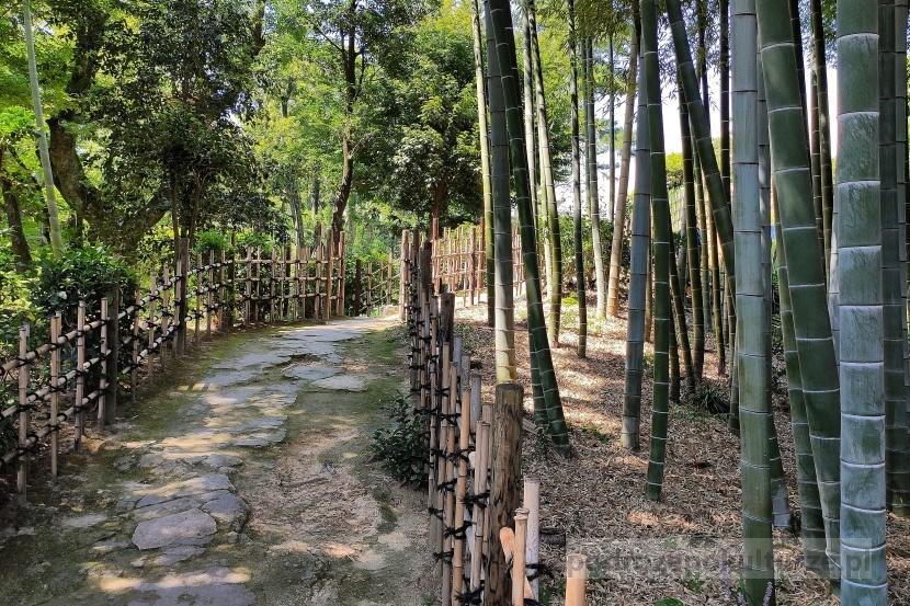 bambusowy las Hiroszima Japonia