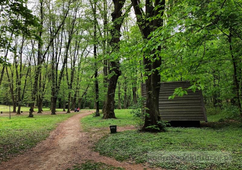 Polana Bielańska, polana pod Dębiną w Lesie Wolskim