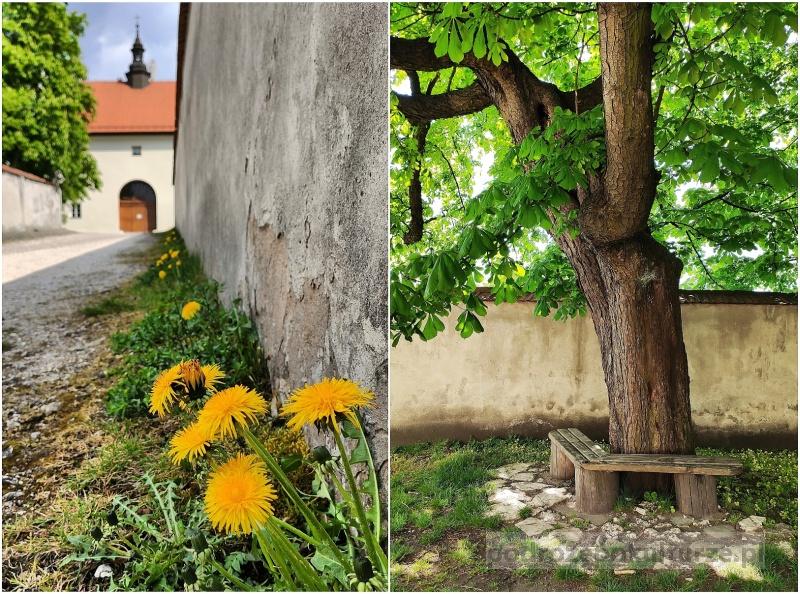 Klasztor Kamedułów na Srebrnej Górze w Lesie Wolskim