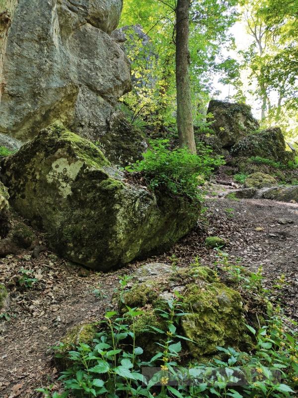 Rezerwat Panieńskie Skały Las Wolski