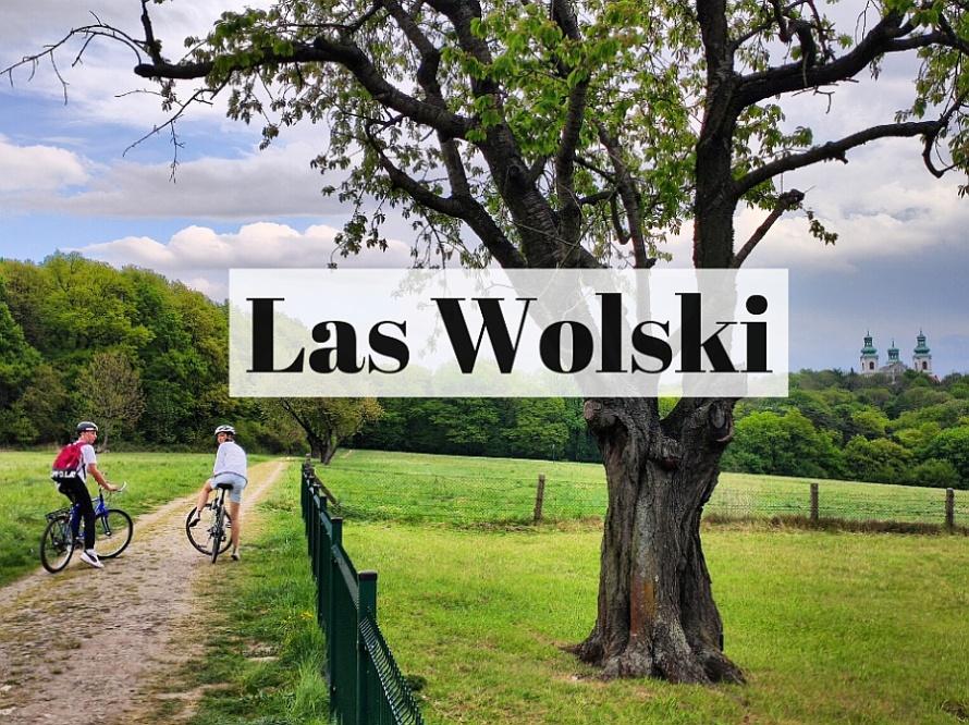 Las Wolski: prawie jak nie Kraków. Prawie jak nie las