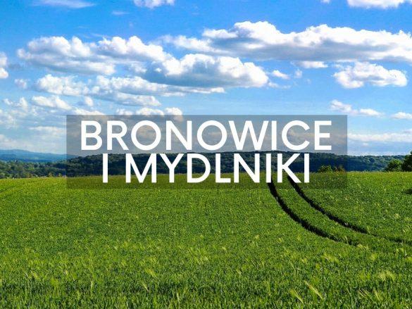 Pola w Bronowicach