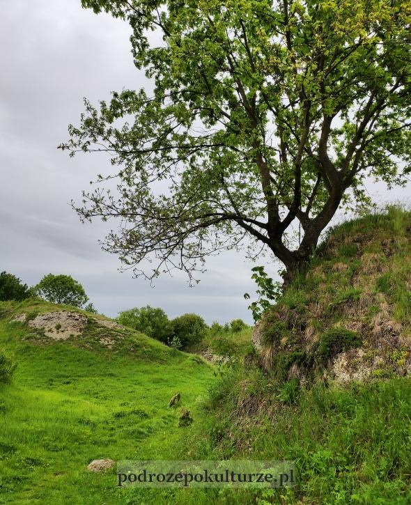 Rezerwat Skorocice Ponidzie. Gipsowy wąwóz