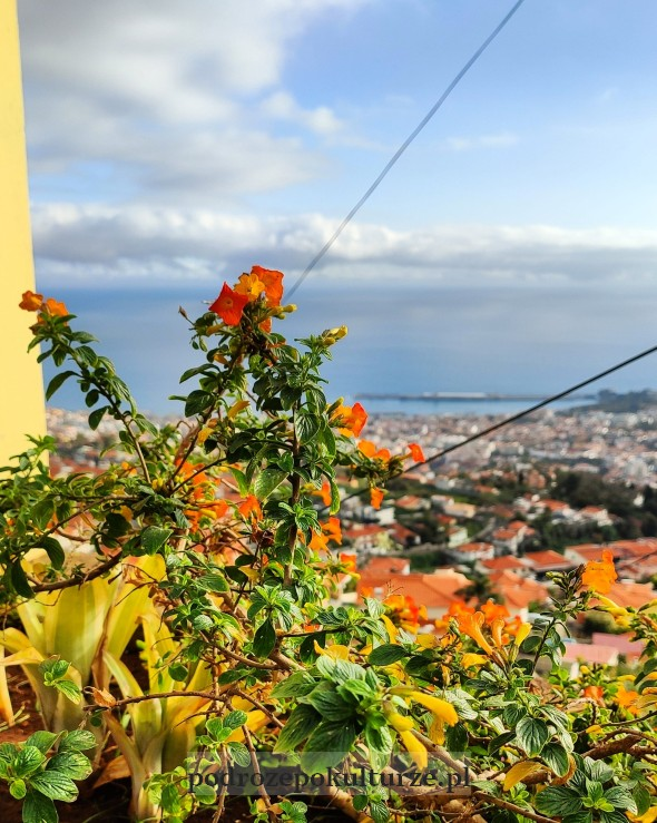 Panorama Funchal z Monte