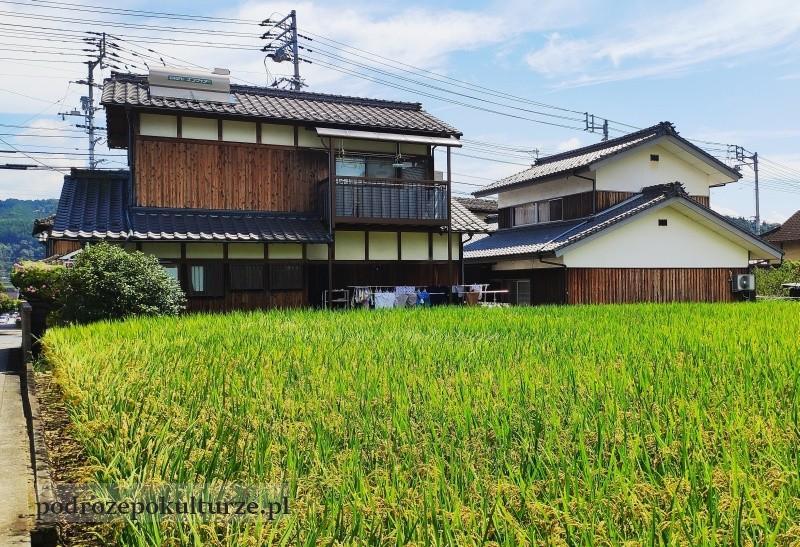Uchiko prefektura Ehime pole ryżowe