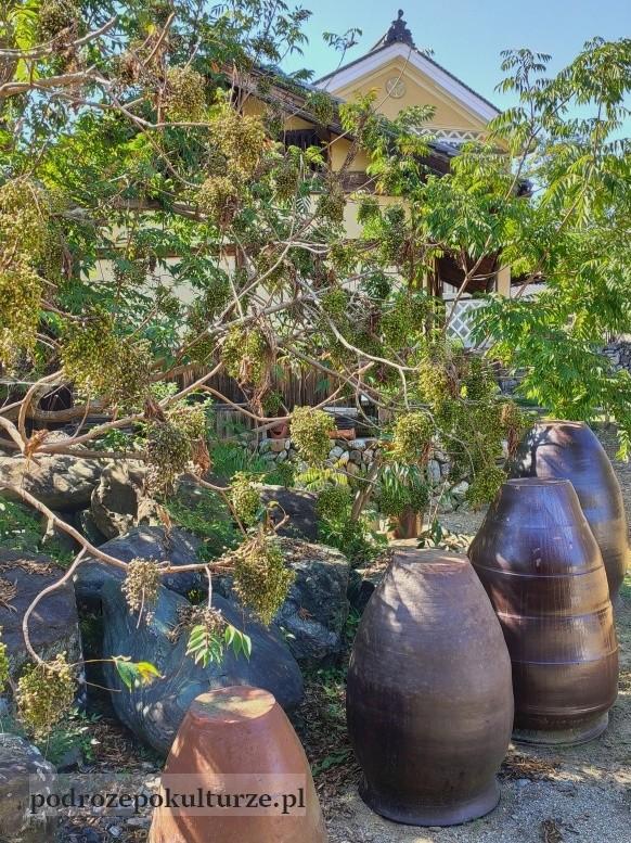 Drzewo sumak Toxicodendron succedaneum