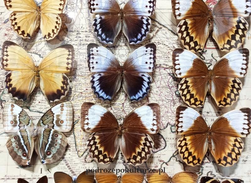 Muzeum Motyli Arthropoda Bochnia. Atrakcje turystyczne
