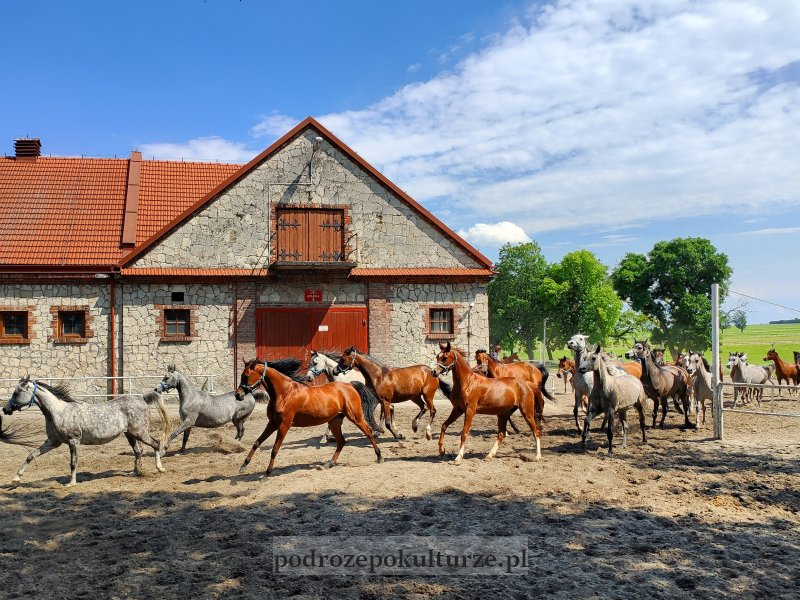 17 zaskakujących i nieznanych miejsc w Polsce - stadnina koni w Michałowie klacze wracają z pastwiska