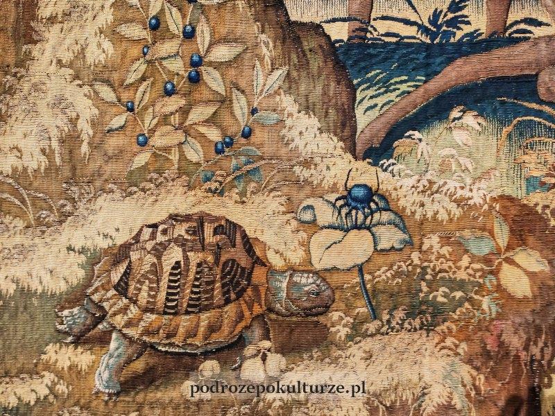 werdiura żółw i pająk